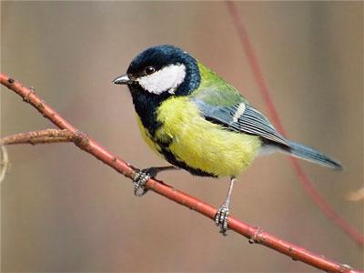 Тема учебного пособия птицы наши