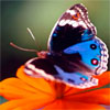 Видео «Цветотерапия в борьбе со стрессом»