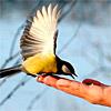 Внеклассное мероприятие «Спасем птиц зимой!»
