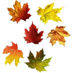 Детские картинки осень листопад